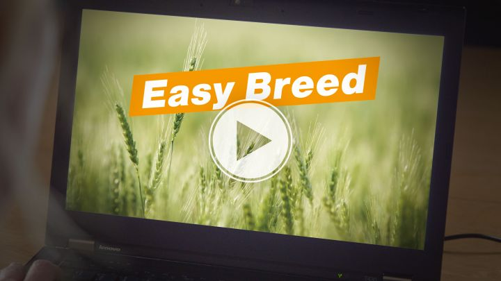 Easy Breed breeding software